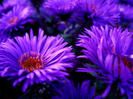 Purple flowers upclose Stok Fotoğraf