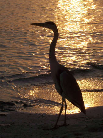 Silhouetted Heron Stock Photo - 707550