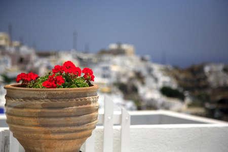 greek pot: Geranio in una pentola con un impianto di profondit� di campo  Archivio Fotografico