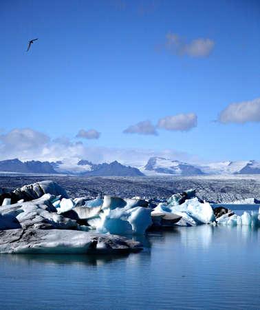 Seagull flying over the icebergs on Jokulsarlon lagoon Iceland Stock Photo