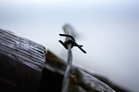 Close up of sharp barbed wire photo