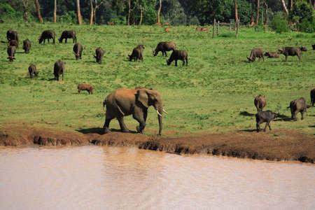 Wildlife at a Treetops waterhole Kenya Africa photo