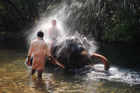 Indian elephant playing in the river spraying a tourist in Goa, India 17 January 2008