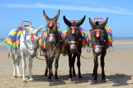 ass fun: Donkeys at a beach resort Stock Photo