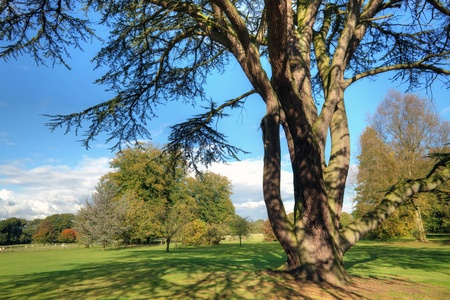 libani: English countryside landscape with an ancient cedar tree  Stock Photo