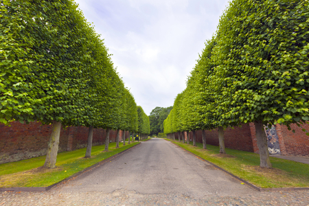 Linden trees along country alley on an estate in Cheshire, England  Stock Photo