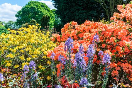 flowering plants: Flowering plants and shrubs in an English garden.
