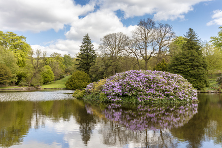 Springtime park scene with small lake and rhododendron shrubs. Stock Photo