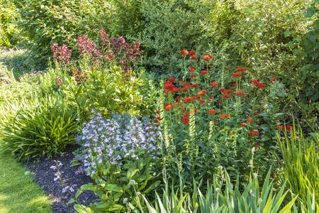 Herbaceous border with red and blue flowers. Stock Photo