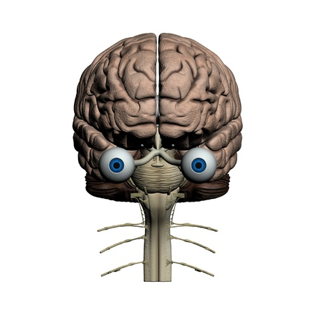 cray: Human brain frontal view Stock Photo
