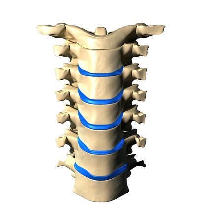 vertebrae view: Lumbar Spine - Anterior view   Front view
