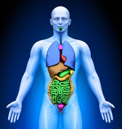 Medical Imaging - Male Organs photo