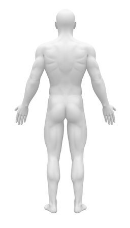 human body silhouette: Blank Anatomy Figure - Back view Stock Photo