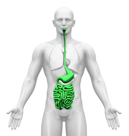 internal organ: Medical Imaging - Male Organs - Guts Stock Photo