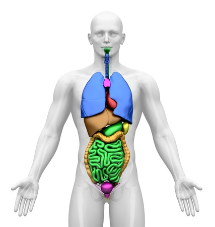 imaging: Medical Imaging - Male Organs Stock Photo
