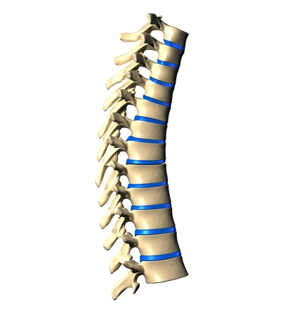 lateral view: Thoracic Spine - Lateral view   Side view Stock Photo