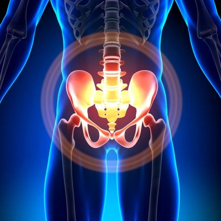 Hip Bone Skelet Medische Anatomie