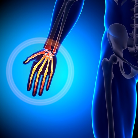radius ulna: Palm Anatomy Bones