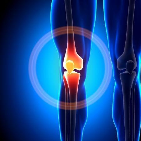 Knee Bones conjuntas anatomía Foto de archivo