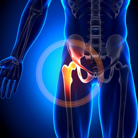 dolor de pecho: Hip Bones conjuntas anatom�a Foto de archivo
