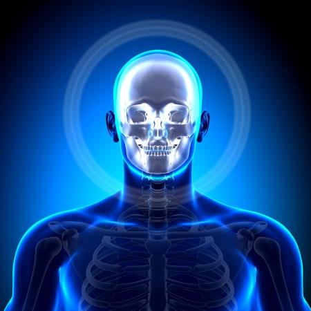 cranium: Cranium Skull Mandible Anatomy Bones