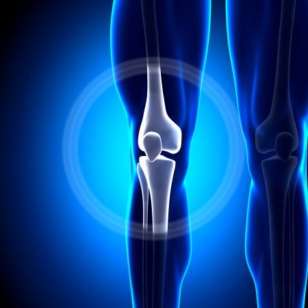 膝の関節の解剖学の骨