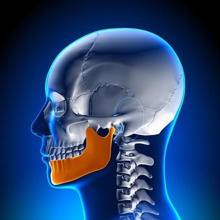 hipofisis: La anatom�a mandibular