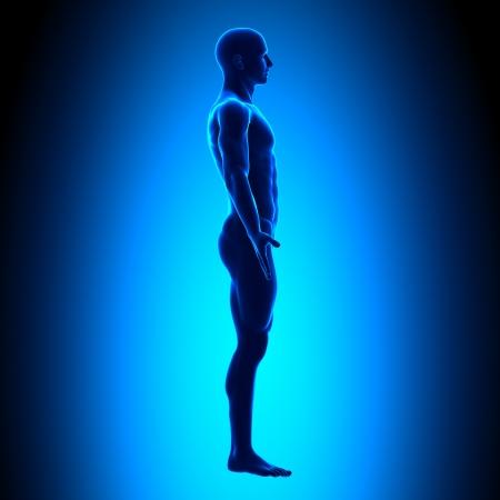 Side Man Abbildung Medical Position Standard-Bild - 20869677