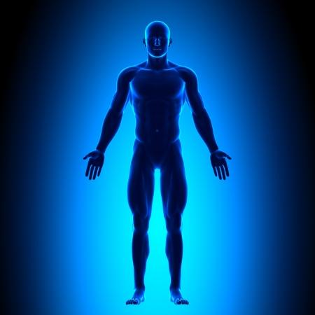anatomie: Voorzijde Man Figuur Medisch Positie