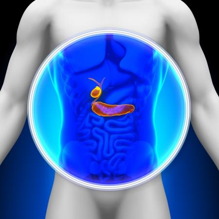 Medical X-ray Scan Pancreas Gallbladder Stock Photo - 20869810