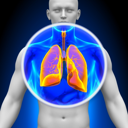 lung disease: Medical X-Ray Scan Lungs Stock Photo