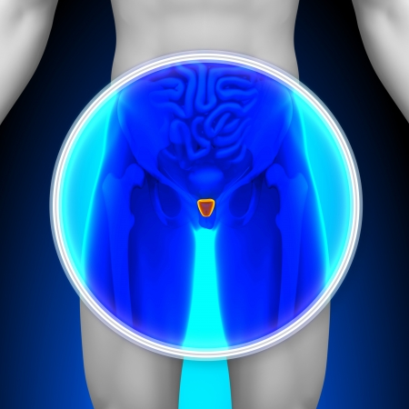 Medical X-Ray Scan Prostate photo