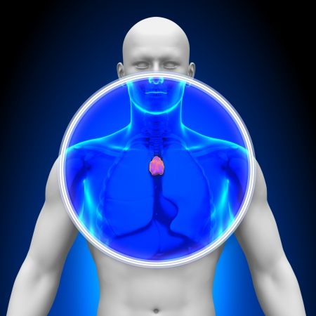 thymus: Medical X-Ray Scan Thymus