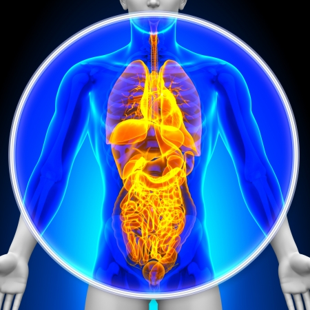 internal organ: Medical X-Ray Scan All Organs