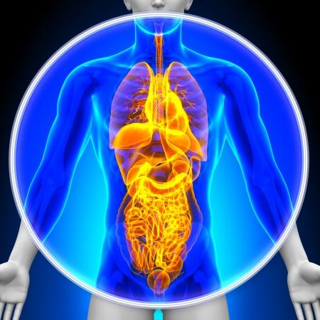 Medische X-Ray Scan alle organen