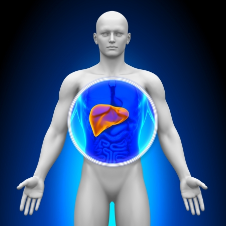 human liver: Medical X-Ray Scan Liver