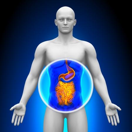 wnętrzności: Medical X-Ray Guts skanowania