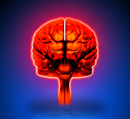 ventricles: Brain - Internal organs - blue background Stock Photo
