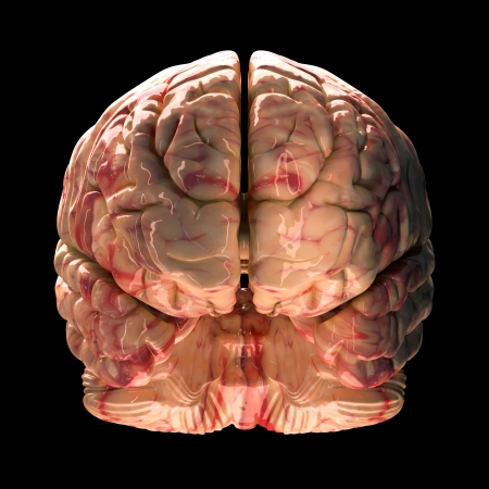 Anatomy Brain - Front View on Black Background photo