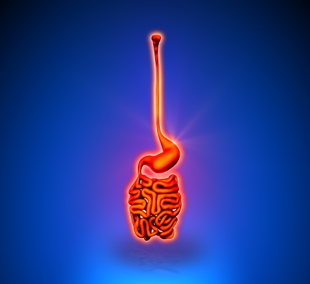 Guts - Internal organs - blue background photo