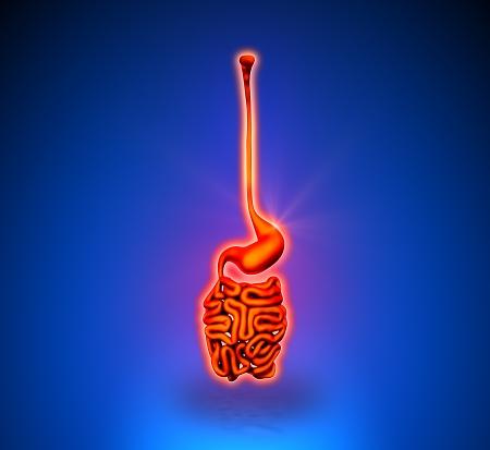 intestino grueso: Guts - órganos internos - fondo azul Foto de archivo
