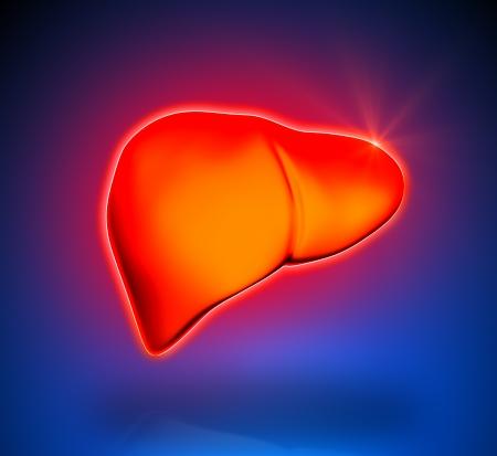 Liver - Internal organs - blue background Stock Photo - 22971492