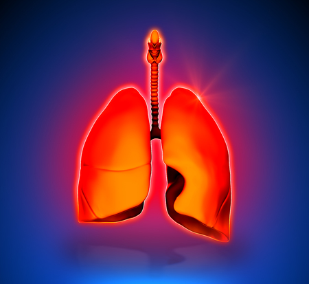 digest: Lungs - Internal organs - blue background Stock Photo