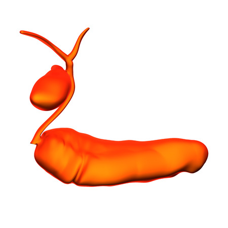 male large intestine: Pancreas Gallbladder - Internal organs - isolated on white Stock Photo