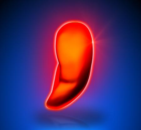 spleen: Spleen - Internal organs - blue background