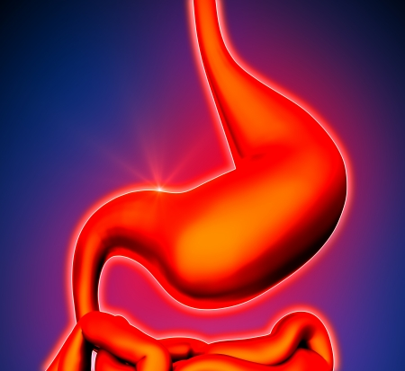 intestino grueso: Estómago - Los órganos internos - fondo azul