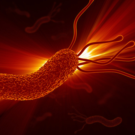 bacteriology: Helicobacter Pylori - Closeup   Detailed Zoom