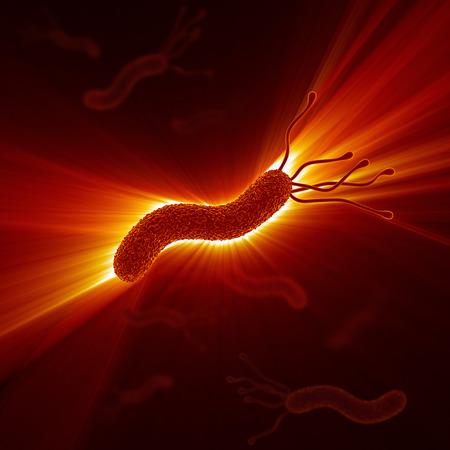 pylori: Helicobacter Pylori