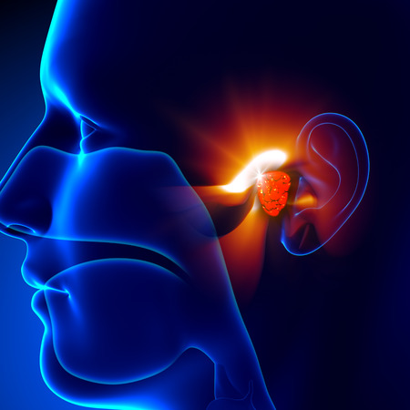 human ear: Adenoids - Ear Stock Photo