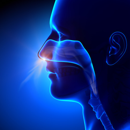 persona respirando: Los senos paranasales - Breathing Anatomía Humana